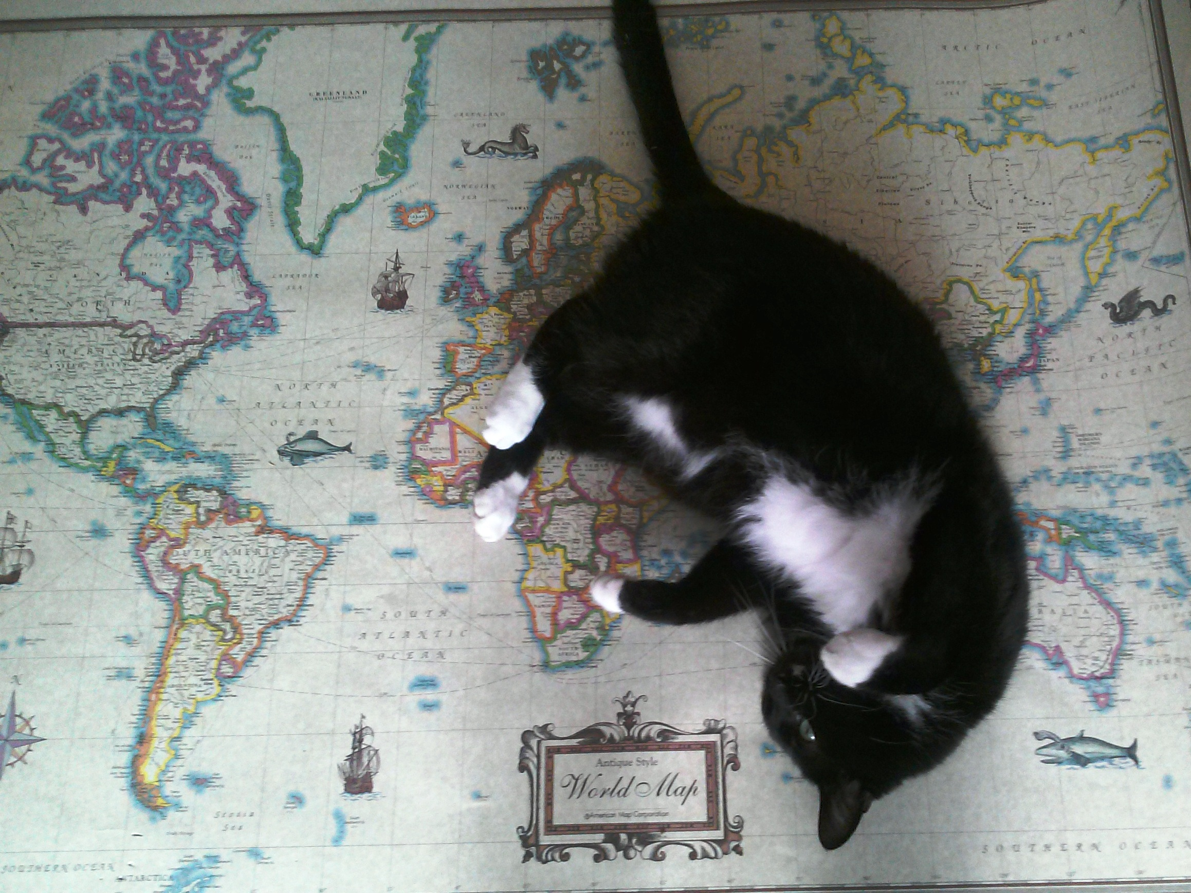 Here be cats mapprinter sneazer agustus cat on the map gumiabroncs Image collections