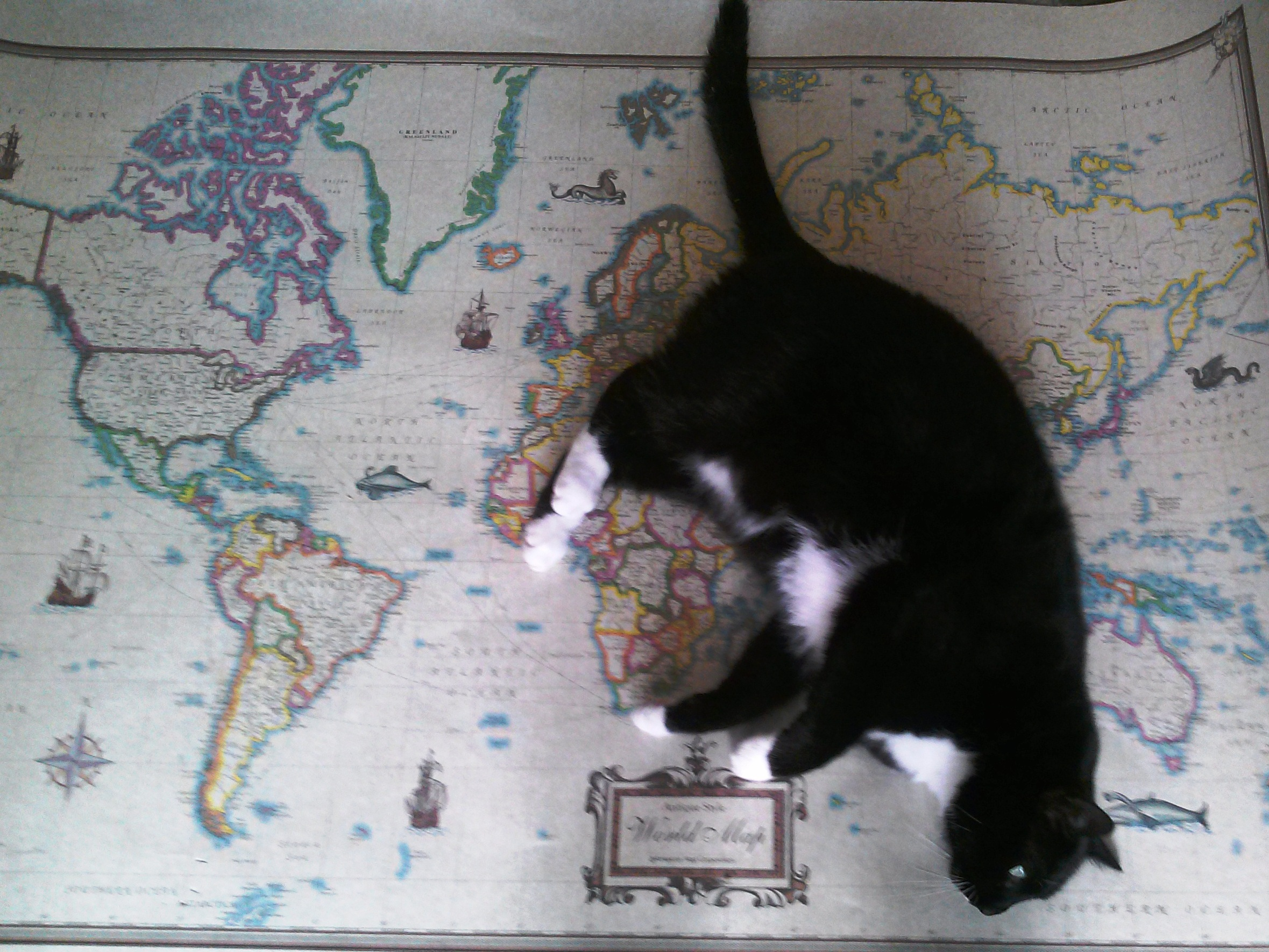 Cats mapprinter cat on the map gumiabroncs Image collections