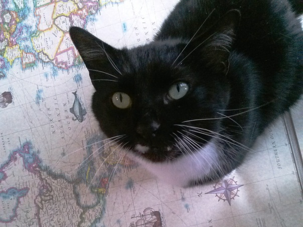 Cat on the Antique Style World Map