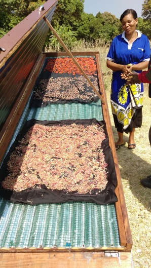 The solar dryer in Itimba Village, is used by the women's groups of Mshewe Village, Mbeya Tanzania to dry tomatoes, onions and beans.