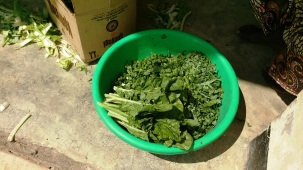 Chopped kale and spinach will be blanched and dried in the solar dryer. Greens are scarce in the dry season. Processing adds value too.Itimba Village, Mbeya, Tanzania