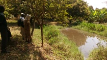 Fish Ponds in Muvwa Village, Mbeya, Tanzania. Runoff from the ponds provides plenty of water for the bananas in the background. Chinese cabbage will be planted under the bananas.
